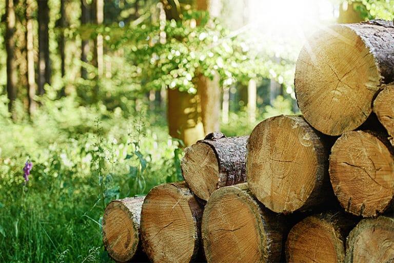Holzindustrie im Wald